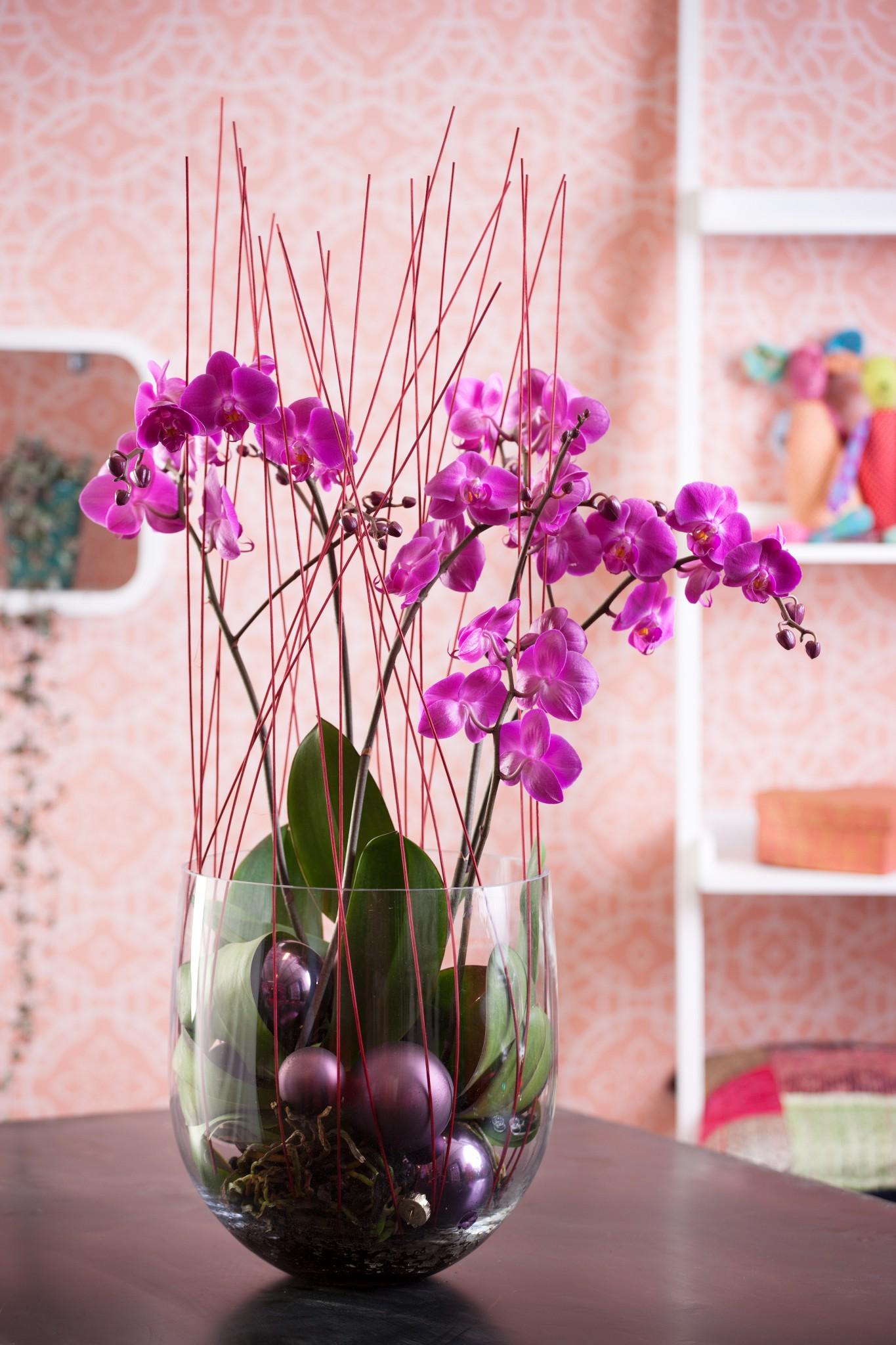 Klippe luftrøtter orkide