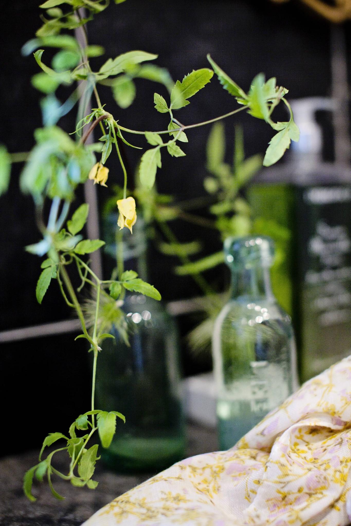 Hengeplanter utendørs