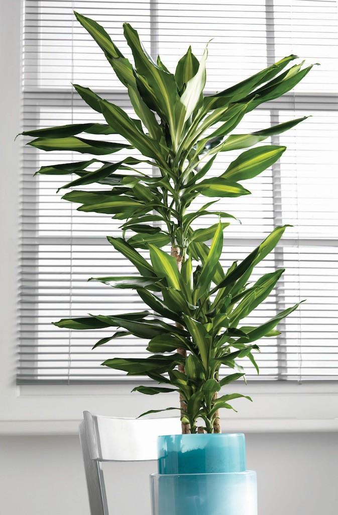 planter som trenger lite lys materialvalg for baderomsm bler. Black Bedroom Furniture Sets. Home Design Ideas