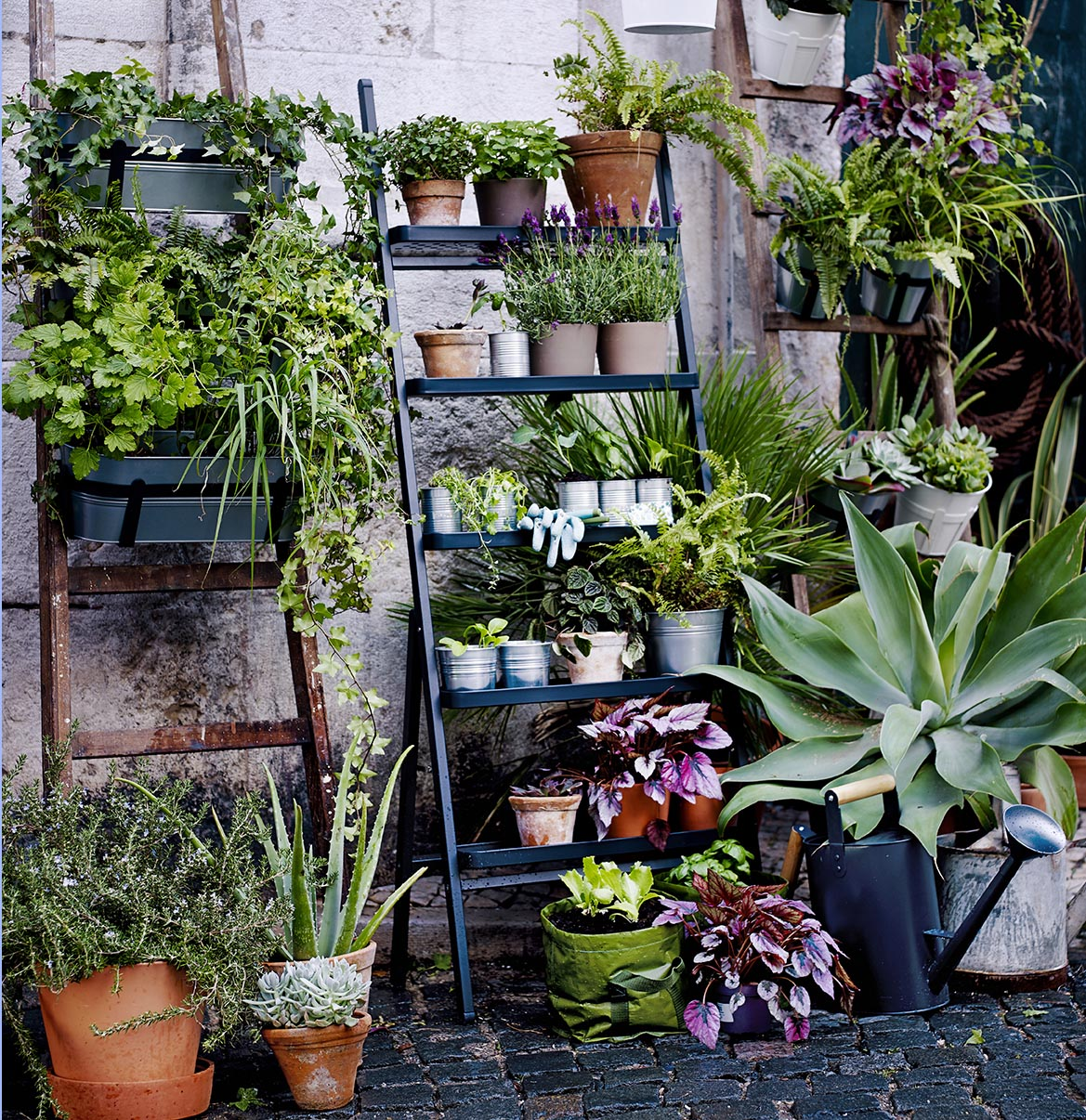Plante i liten hage