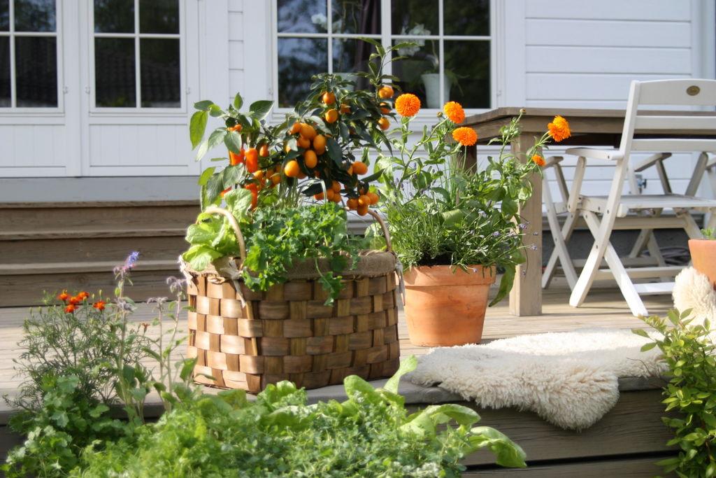 Gartnertips – min oase