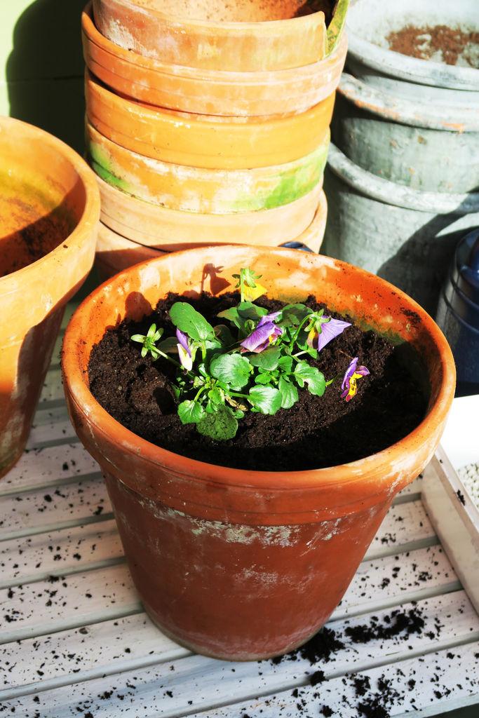 Tips til planting av stemor.