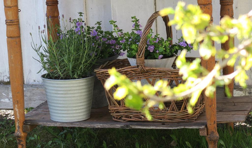 Tips til hvor lavendel kan plantes, hvordan plantene kan stelles, og hvordan man kan skape fin dekor rundt plantene.
