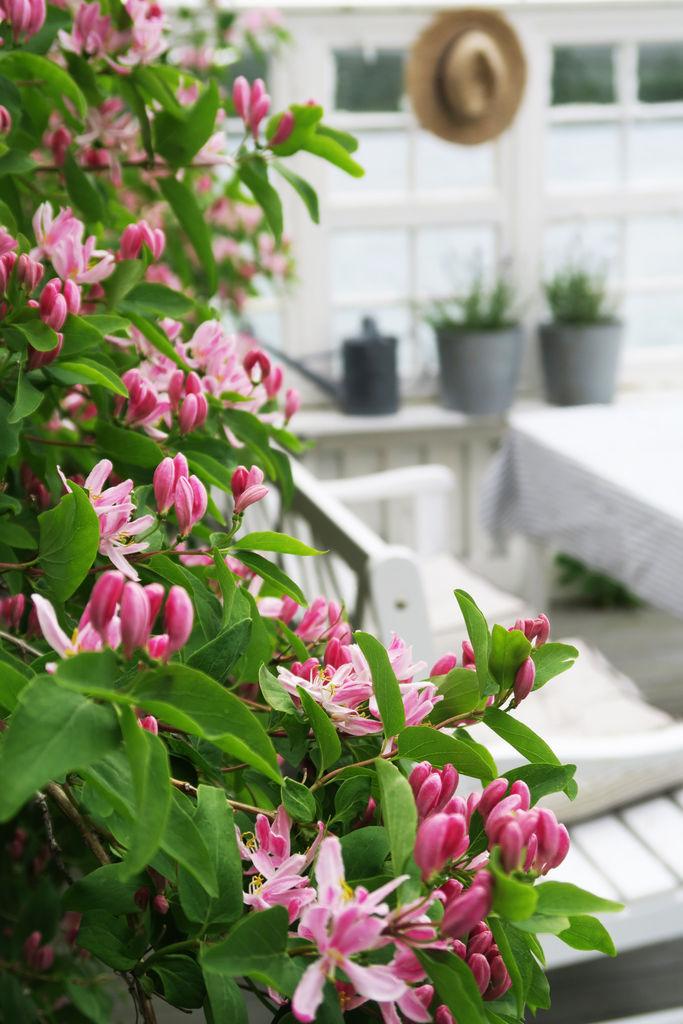 I dette innlegget vil jeg vise hvor vakkert det blir i hagen når prydbuskene blomstrer. Det blir også tips til hvordan man med utgangspunkt i prydbuskene kan gjøre hagen enda vakrere.