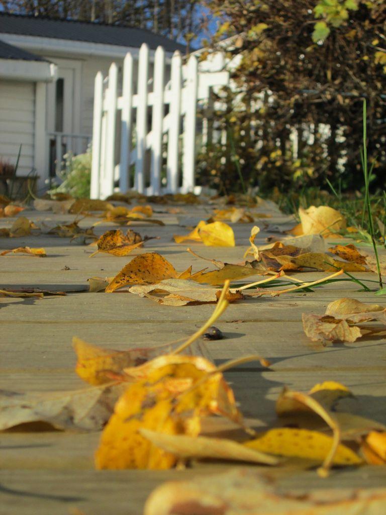 La naturen pynte til høst i hagen. Å gjøre bruk av det naturen har å by på gir hagen liv og sjarme uansett årstid. Det blir dekorativ og billig pynt.