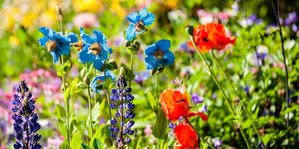 Ti tips til hage for nybegynnere: : Dette bør du gjøre og ikke gjøre i hagen. Mange drømmer om større plass og en hageflekk, men vet ikke hva de skal gjøre.