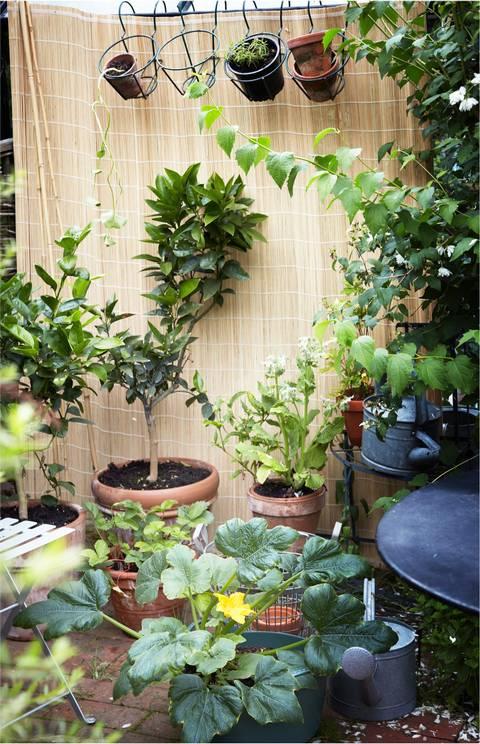 Et lite hjørne på terrassen eller en sykkelkurv. Det er alt du trenger for å lage en bugnende kjøkkenhage med grønnsaker, urter og blomster.