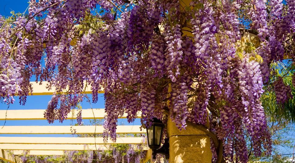 Drømmer du om en koselig hagekrok der taket er dekket av vakre klatreplanter? De skaper en koselig stemning i hagen. Her er to eksperters beste tips.