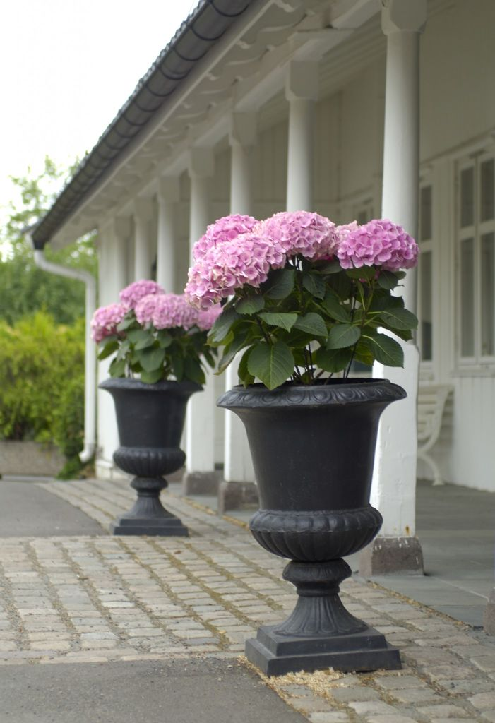 Riktig bruk av stein i hagen gir linjer og struktur. Elementer som terrasser, murer, trapper og gangveier danner utgangspunktet for en god hageplan.