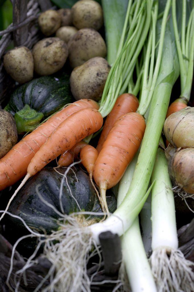 Grønnsaker i hagen. Kjøkkenhage.