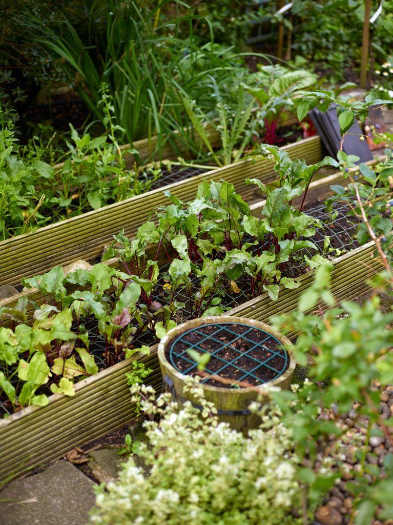 En frodig hage midt i storbyen? Visst er det mulig! Stikkord er blomstereng, frukttrær, kjøkkenhage og mange sitteplasser.
