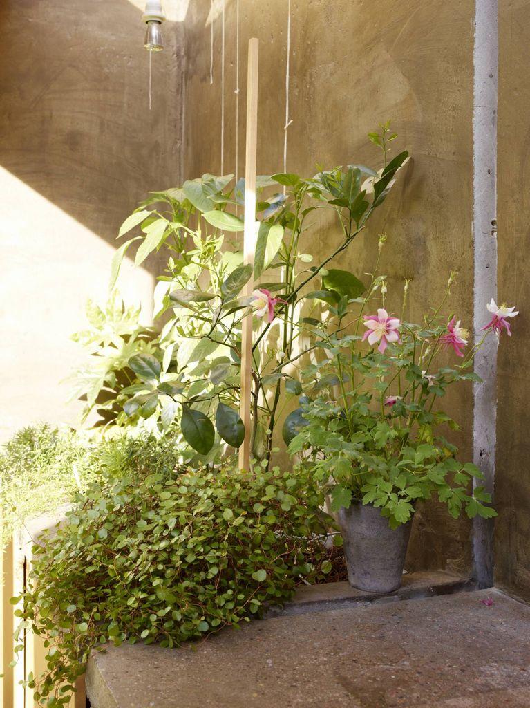 I en bakhage på Vålerenga møtes en betongarm fra 2012 et trehus fra 1823. Se hvordan hagen integreres i boligen, som et ekstra rom.