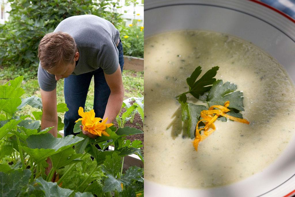 Squash fra hagen rett i gryta. Grønnsaker, kjøkkenhage.