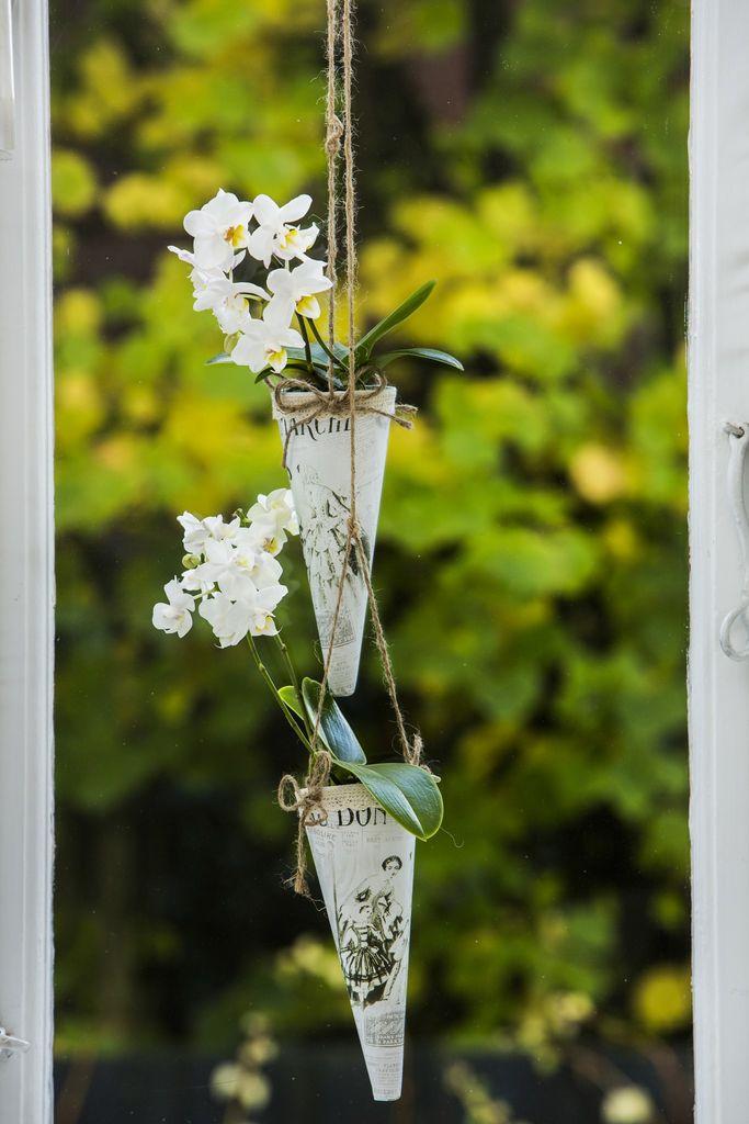 Et eggeglass i uka er slett ikke nok for en orkidé. Her får du gartnerens beste tips til å få orkidéen din til å overleve - og leve lenge.