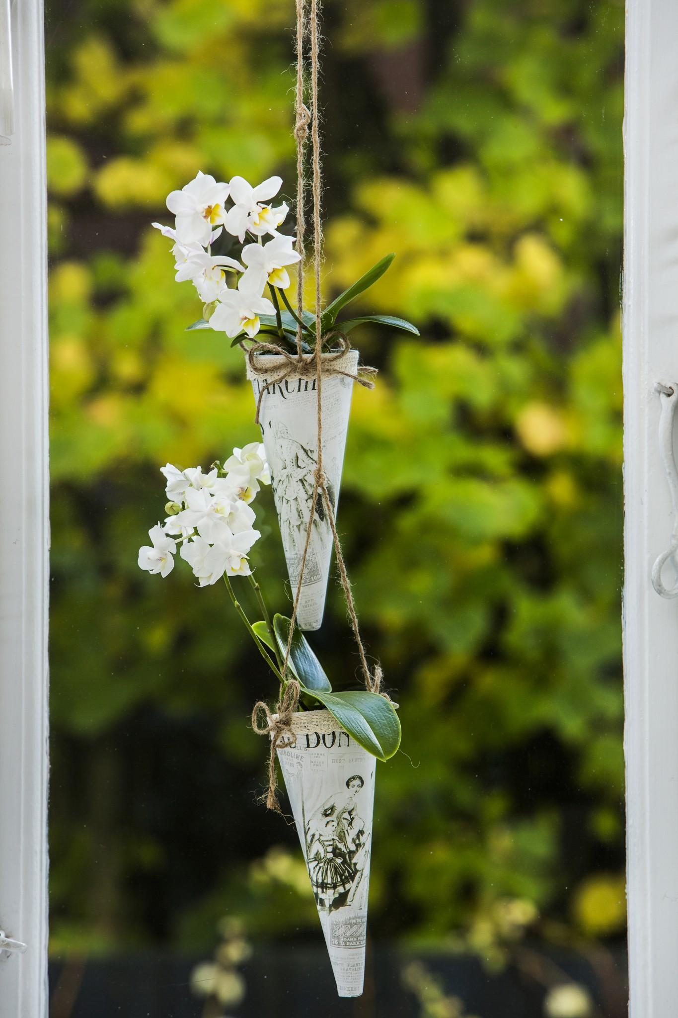 Luftrøtter på orkideer