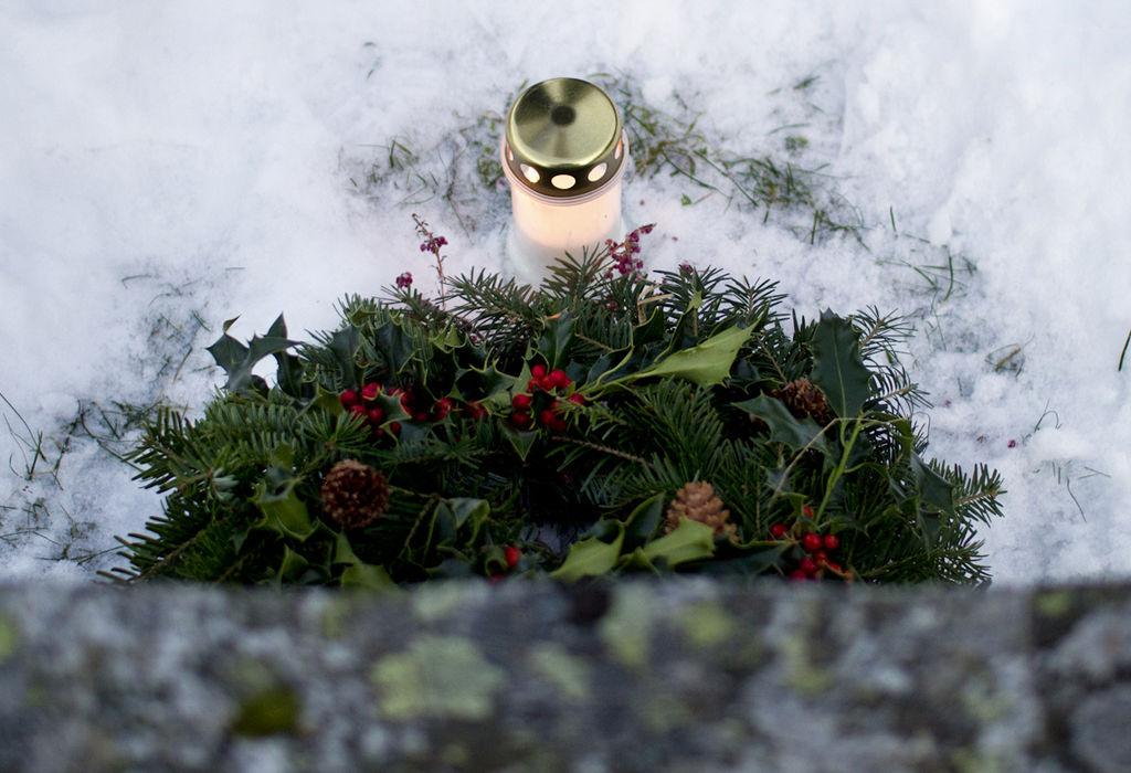 Når bør du handle inn juleplantene som julestjerne, amaryllis og svibler? Her får du en smart liten guide.
