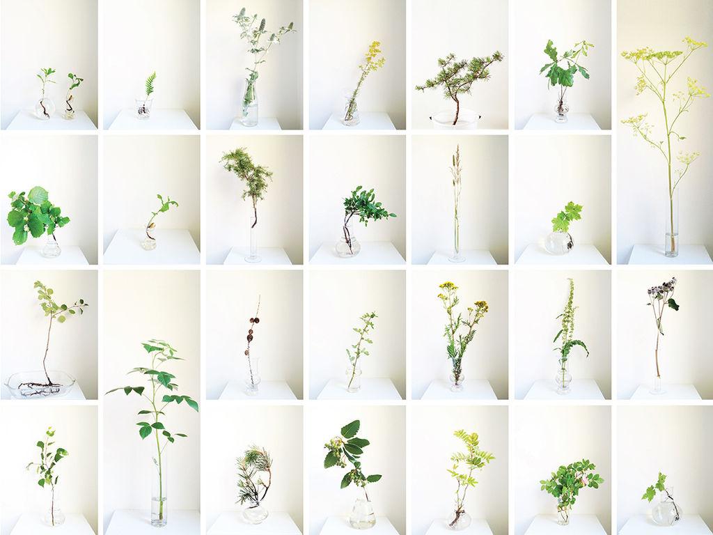 Vis frem hele planten med røtter og alt i reagensglass eller andre glassvaser. Det er trenden nå, og den kommer for fullt.