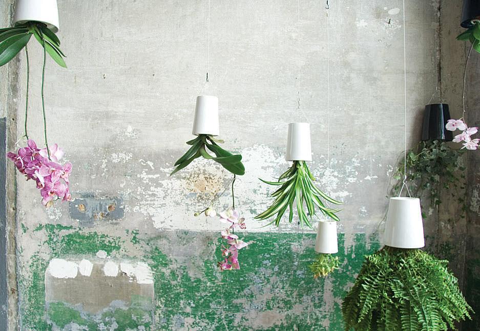 Heng kjøkkenhagen i taket. Eller andre blomster og planter for den saks skyld.