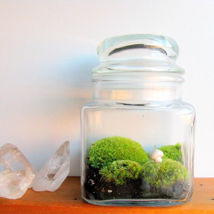 http://www.shelterness.com/25-cool-ideas-to-decorate-your-home-with-moss/