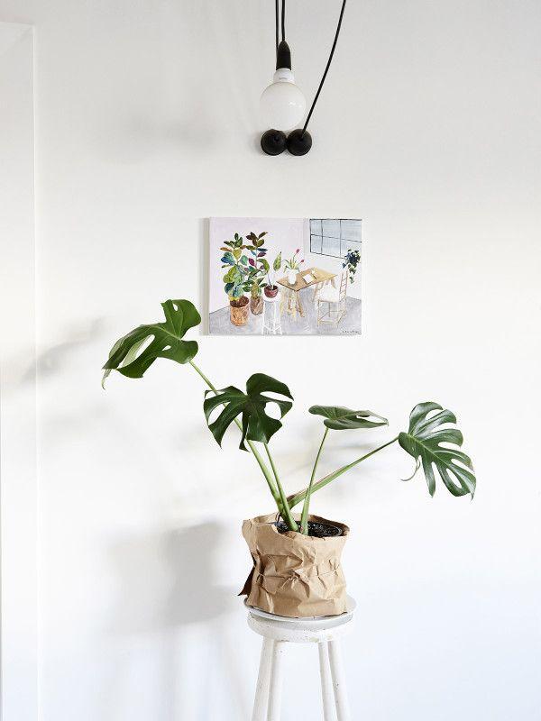 Gjør hjemmet ditt øyeblikkelig frodig ved hjelp av store grønne planter. Monstera deliciosa er en av de store grønne som virkelig har hatt et comeback fra 70-tallet