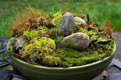 serenityinthegarden.blogspot.com