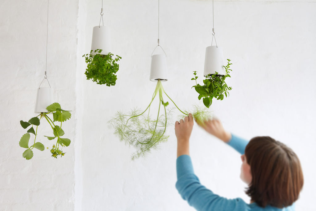 Nå kan du lage din helt egen hengende hage! Trenden med å henge opp plantene har vært en stund, og en av de kanskje mest praktiske versjonene av trenden, er nettopp å henge opp urtene i taket. Det frigir benkeplass, er dekorativt og deilig grønt, og ikke minst praktisk. Da har du urtene dine lett tilgjengelig til matlagingen.