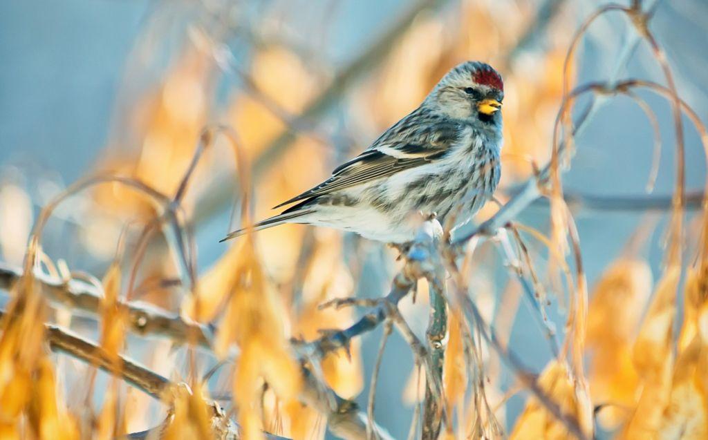 Å by småfuglene på fuglemat om vinteren hjelper dem gjennom de kaldeste månedene, og det er dessuten utrolig hyggelig å få besøk av de små fjærballene og se dem på nært hold.