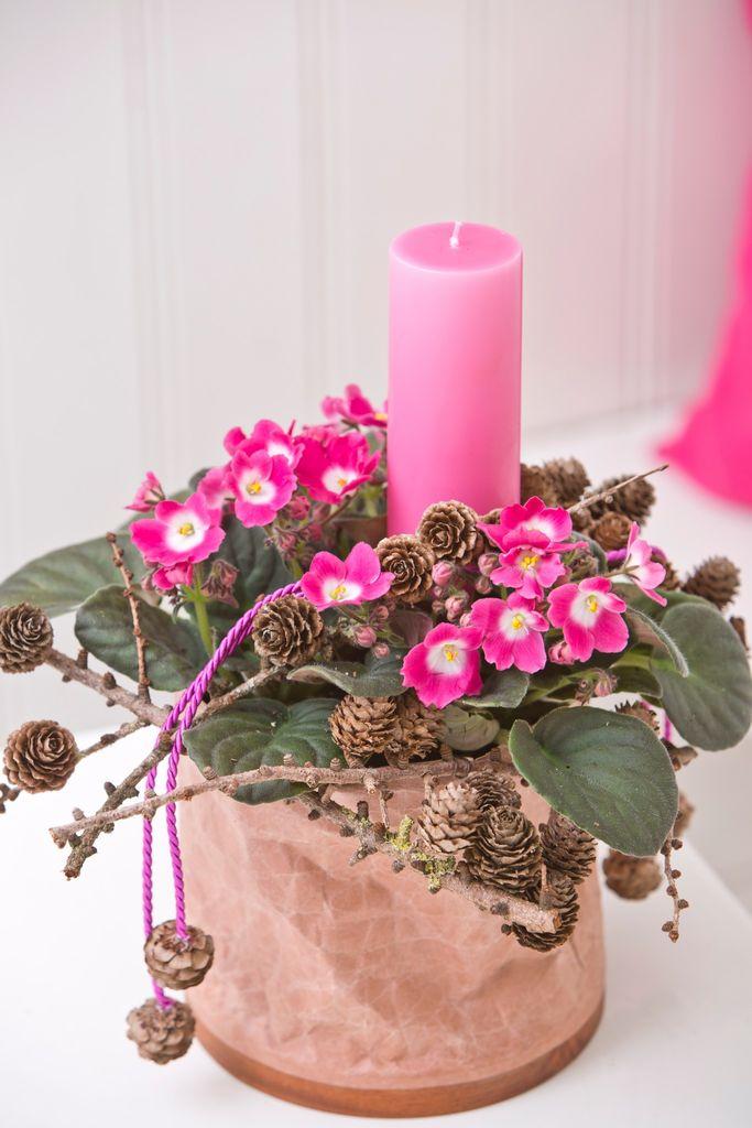Saintpaulia kommmer i mange farger. Rosa er ikke like vanlig som lilla kanskje, men med litt kongler og pynt gjør den seg også godt i adventstiden.