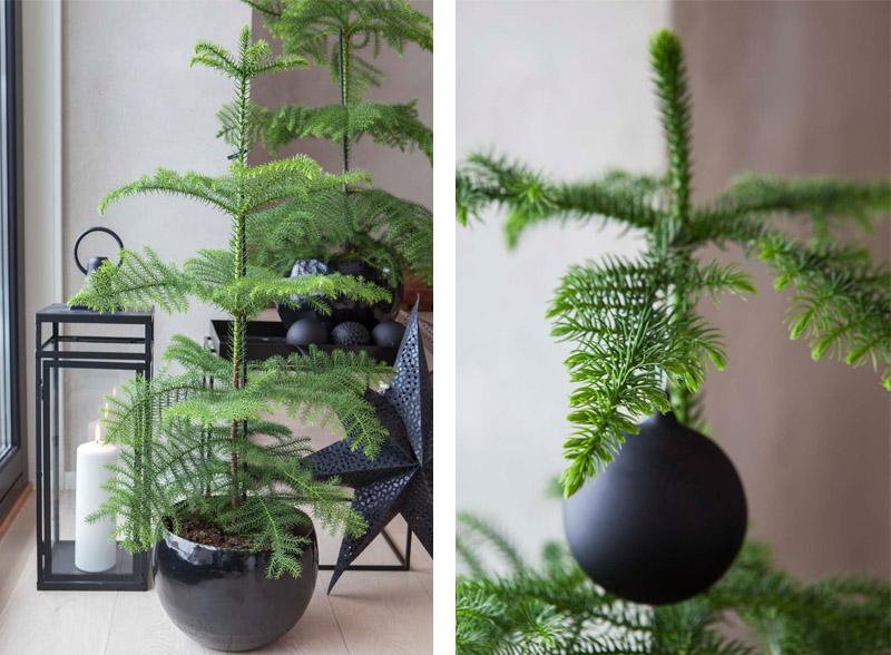 En stuegran er et juletre i miniversjon, gjerne pent presentert på stuebordet.