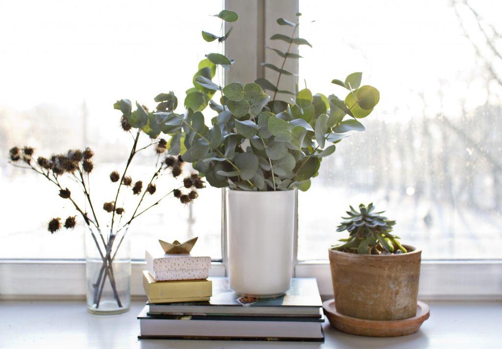 Eukalyptus-greiner får du kjøpt i omtrent alle blomsterbutikkene nå. De gjør seg godt alene, eller sammen med andre planter og dekor.