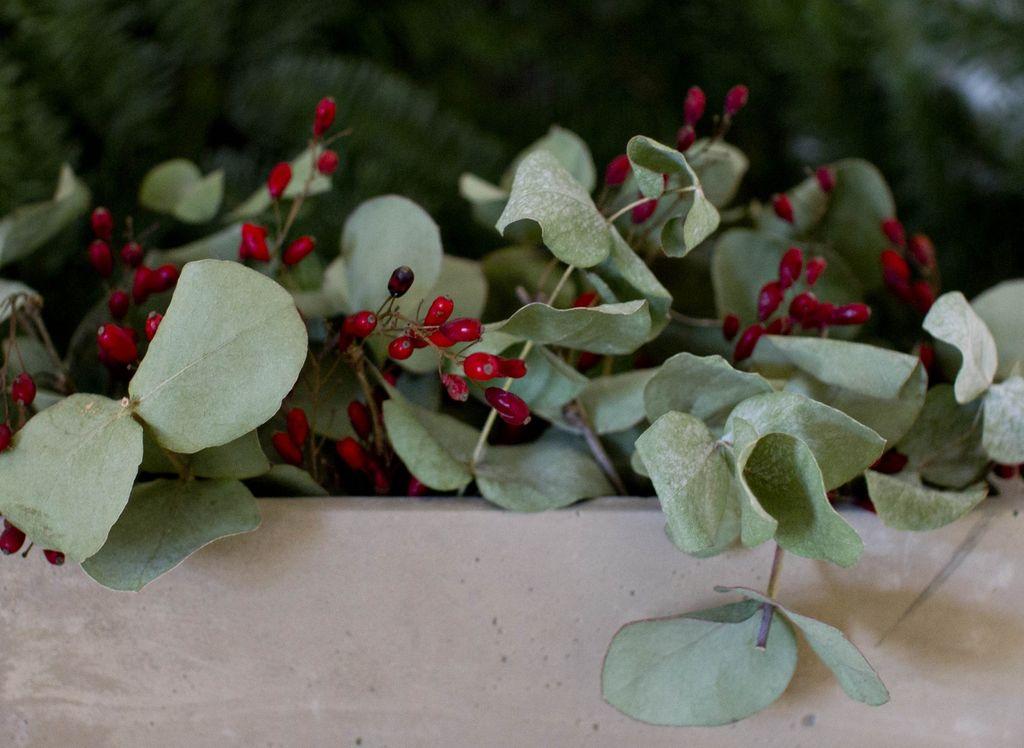 Vintergrønt inne med trendy eukalyptus