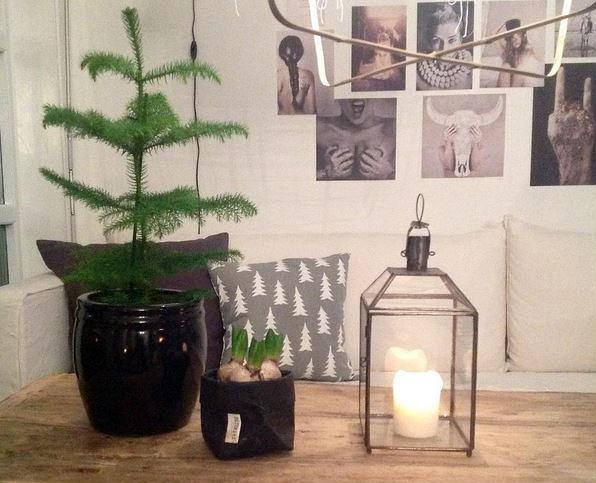 Stuegran er julens mest trendy planteinnslag.