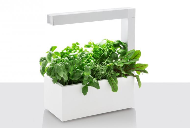 Potte med lys til å dyrke urter innendørs.