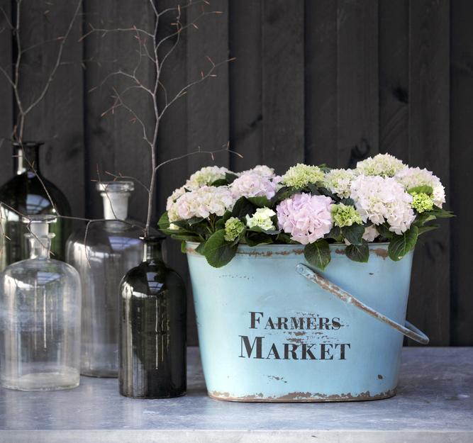 Foto: floradania.dk