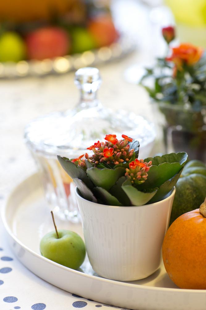 Ildtopp er en av våre aller mest kjære og populære juleblomster.