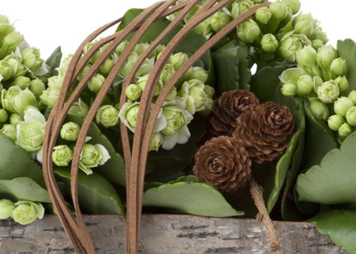 Ildtopp er en av julens mest populære blomster. Den er nok mer vanlig i sterkere farger enn denne. Kjente du den igjen? Foto: floradania.dk