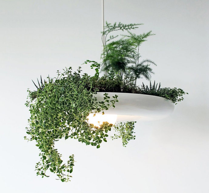 Lampe med grønne planter fra Ryan Taylor