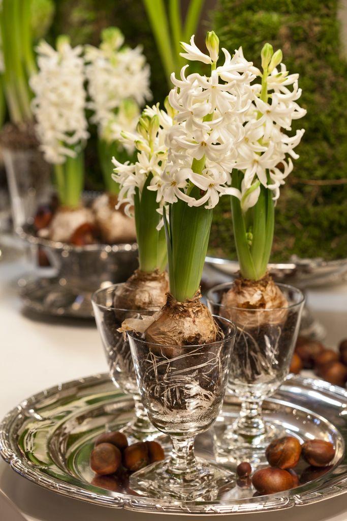 Hvite hyasinter er veldig populære rundt juletider. Foto: blomsterframjandet.se