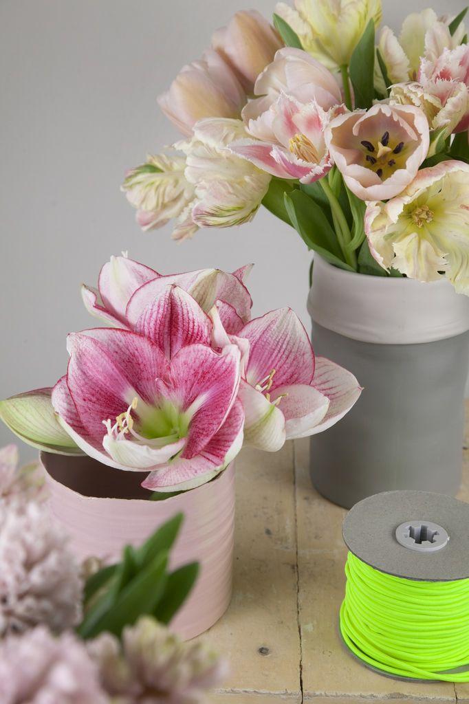 Tulipaner er landets mest solgte snittblomst.