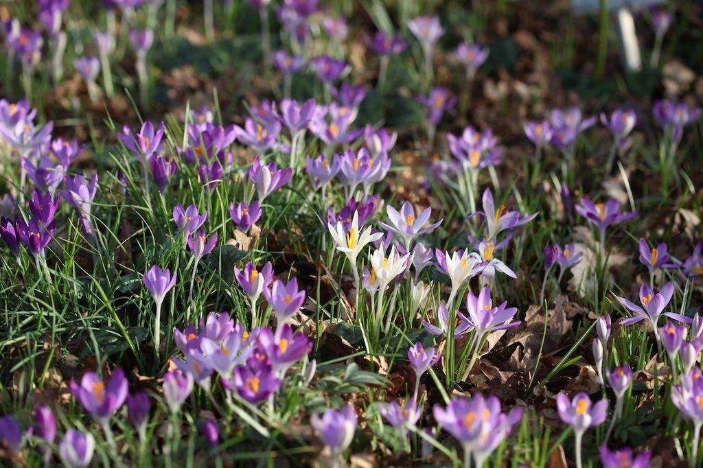 Start hageåret i januar. Dette kan du gjøre for hagen din i januar.