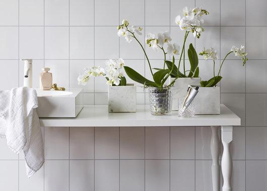 Orkidéer trives godt i det fuktige miljøet på baderommet. Foto: Mester Grønn