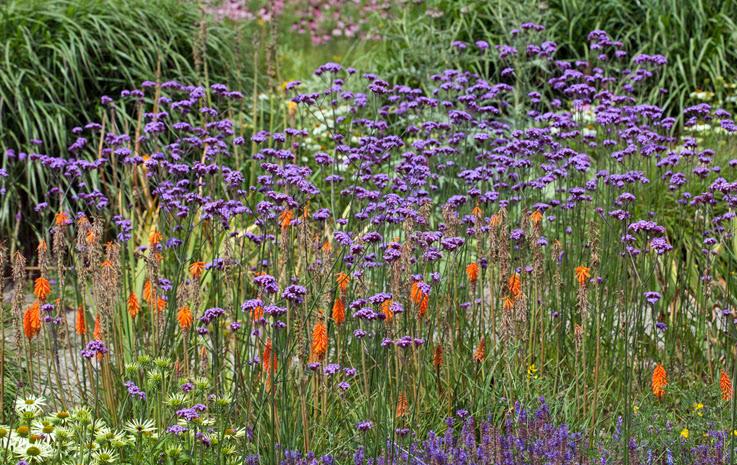 Siden vi her i Norge har så kort vekstsesong, ofte med lave sommertemperaturer har mange planter godt av å tjuvstarte veksten litt inne.