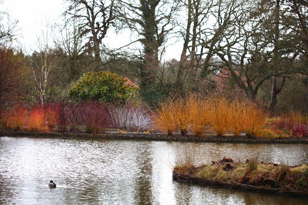 Bli med på hagebesøk på vinterstid til berømte Wisley Gardens i England. De gjør hagen til en opplevelse med en vintersti med planter som blomstrer på vinteren og tidlig vår.