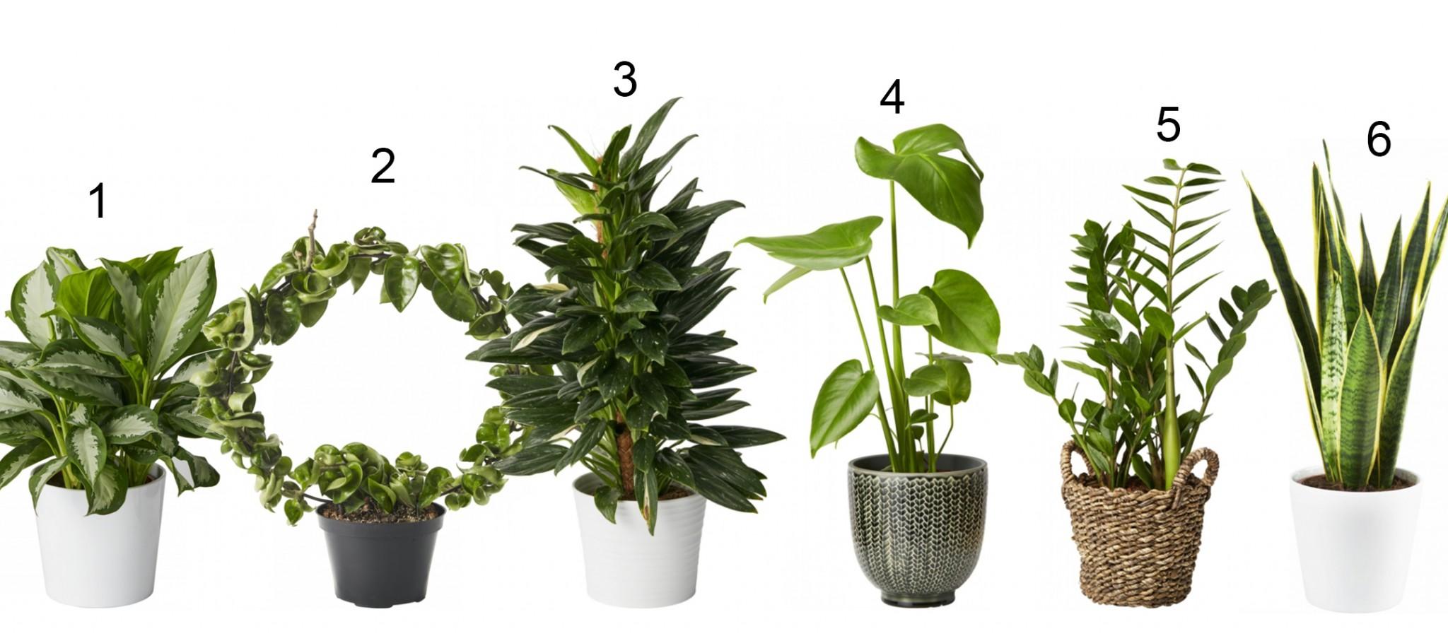 planter der tåler sol