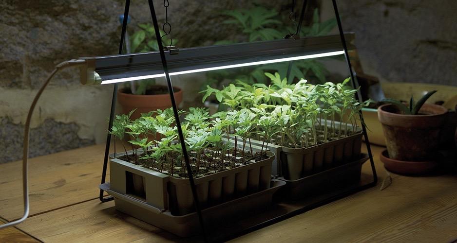 Det du trenger å vite om plantelys.