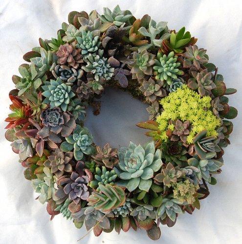 Sukkulenter kommer i mange former, størrelser og farger. Foto: Topiary Art Works/Amazon.com
