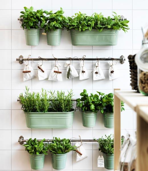 Ønsker du en frodig vinduskarm full av struttende friske krydderurter? For de fleste av oss kan det virke utfordrende, men det blir lettere å lykkes når vi vet litt om hva slags stell urtene skal ha.