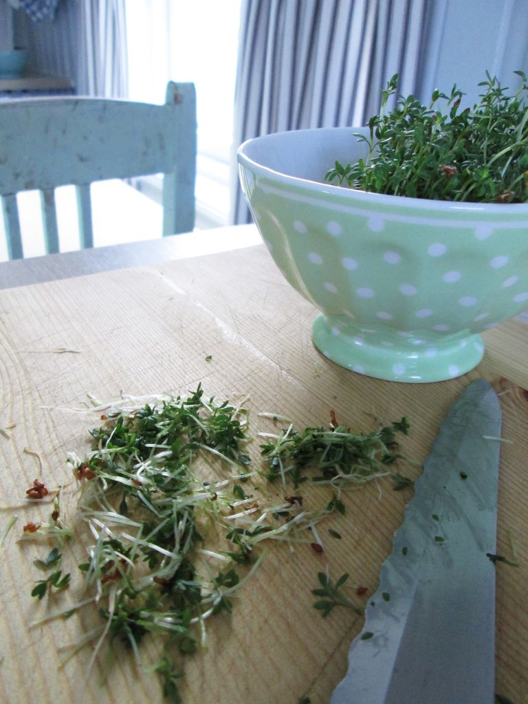 Her får du tips til hvordan du kan så karse, og bruke den i eggerøre og salat.
