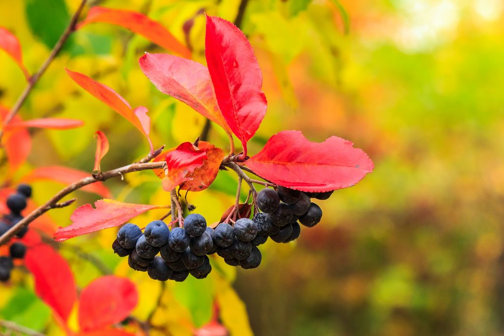 Mange av plantene vi drømmer om, er ikke herdige nok til å trives i klimasonen vi bor i. Det kan du selv endre på ved å lage et lunt mikroklima i hagen din.