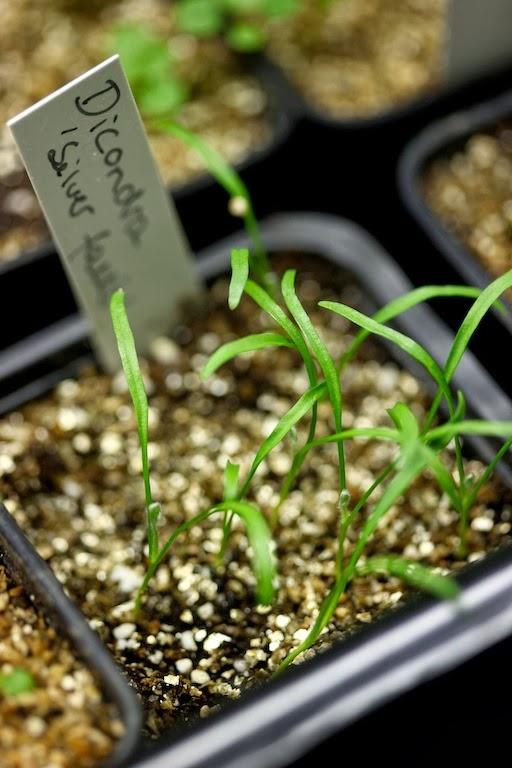 Mange planter bør du så allerede i februar. Her får du en liste over hvilke - og litt om hvordan du kommer i gang. Lykke til!